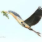 Blue Heron Series Twig by Deborah  Benoit