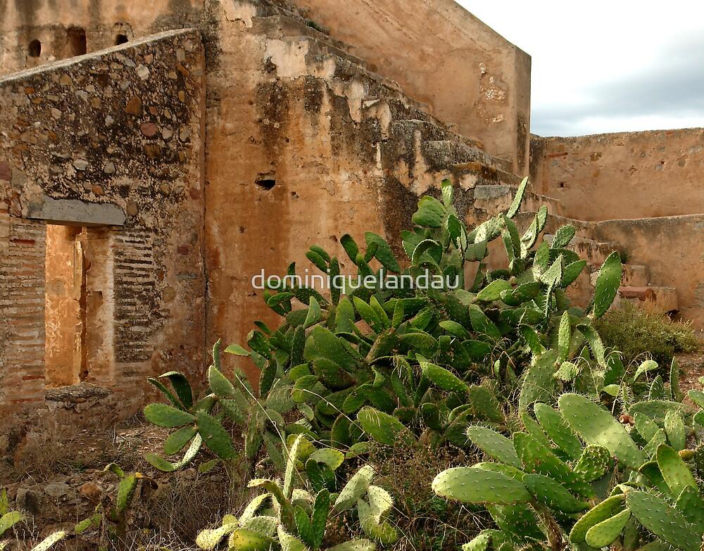 cactus by dominiquelandau