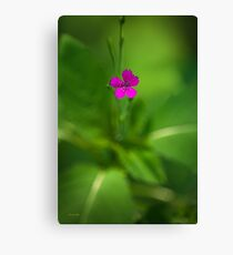 Maiden Pink Wildflower Canvas Print
