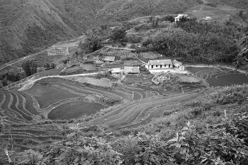 Lush monochrome valley by Gregorio1