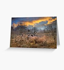 Sunset Geese Greeting Card