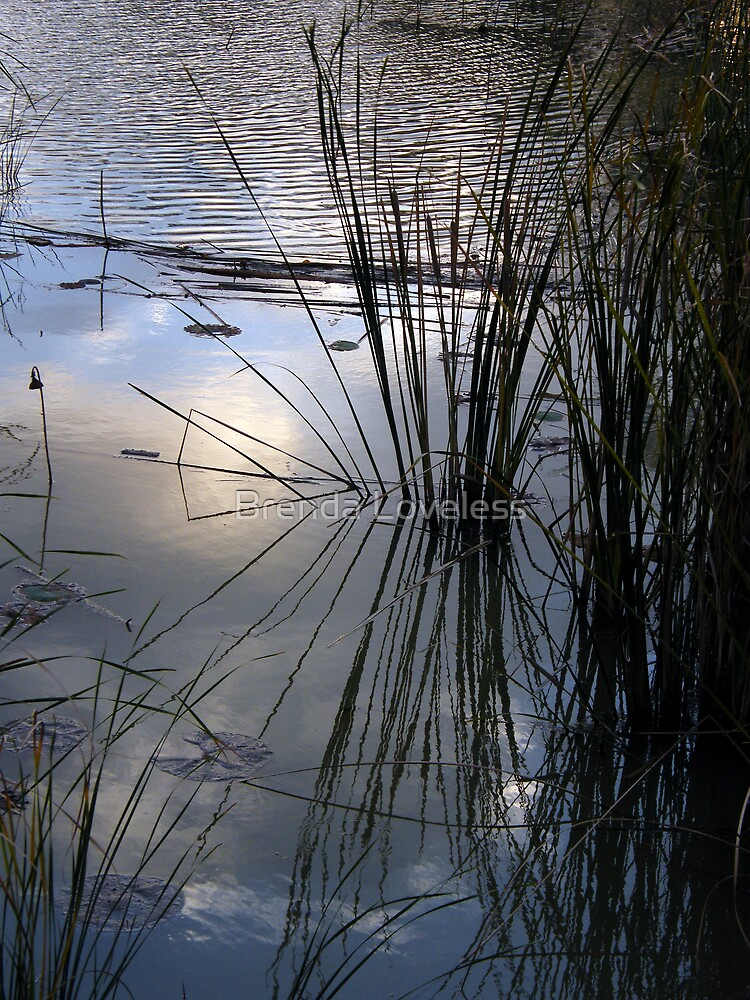 pondside reflections by Brenda Loveless