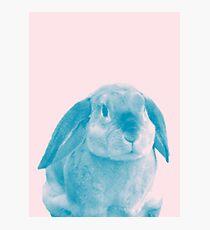 Rabbit 04 Fotodruck
