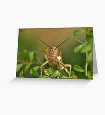Grasshopper Tree Topper... Greeting Card