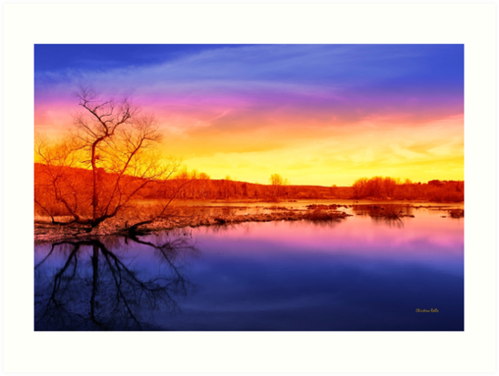 Tranquil Tree Reflection by Christina Rollo