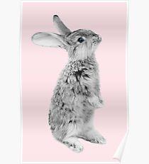 Rabbit 08 Poster