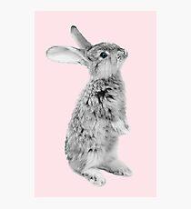 Rabbit 08 Fotodruck