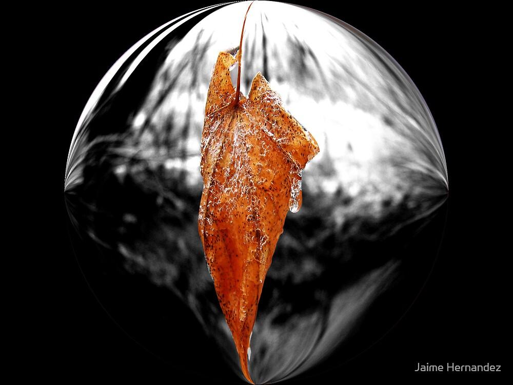 The Last Drop Of Life by Jaime Hernandez