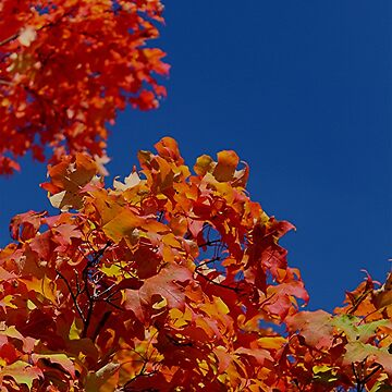 The beautiful colors of fall...look up in the sky by jammingene
