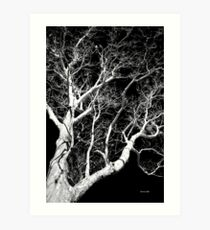 Black and White Tree III Art Print