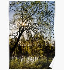 Weeping Willow Sunrise Landscape Poster