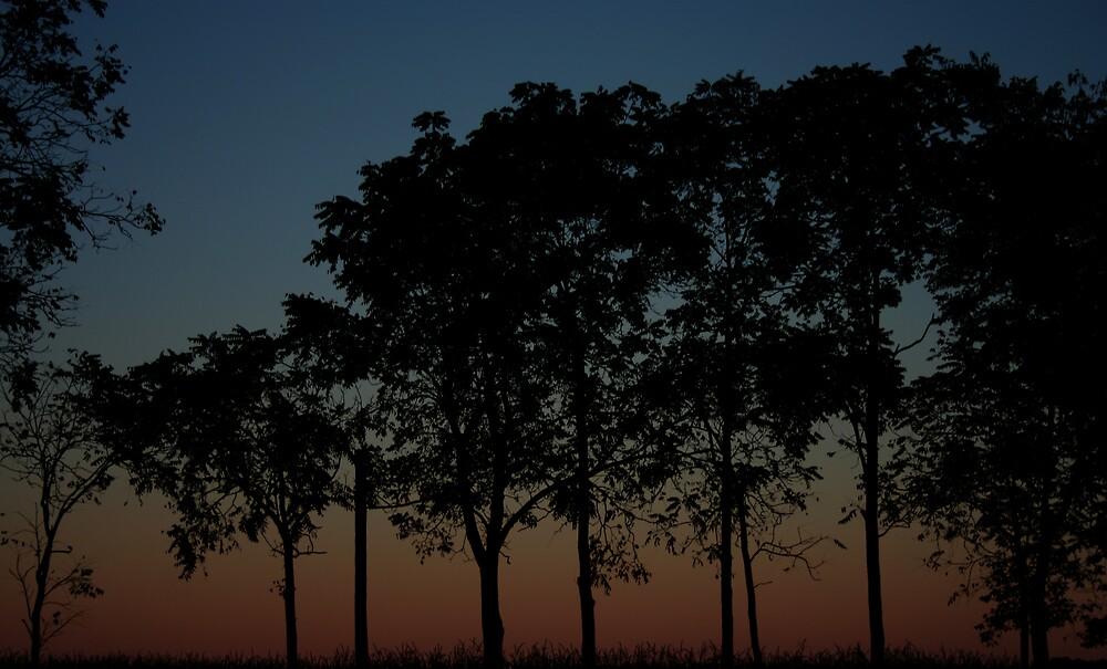Sunset by JensPhotography