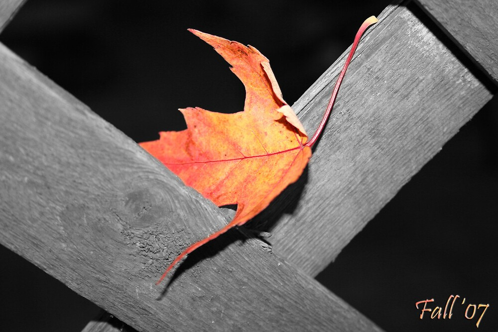 Fall 2007 by JensPhotography