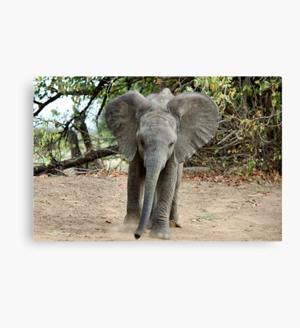 DON'T COME ANY CLOSER! -THE AFRICAN ELEPHANT – Loxodonta Africana Canvas Print