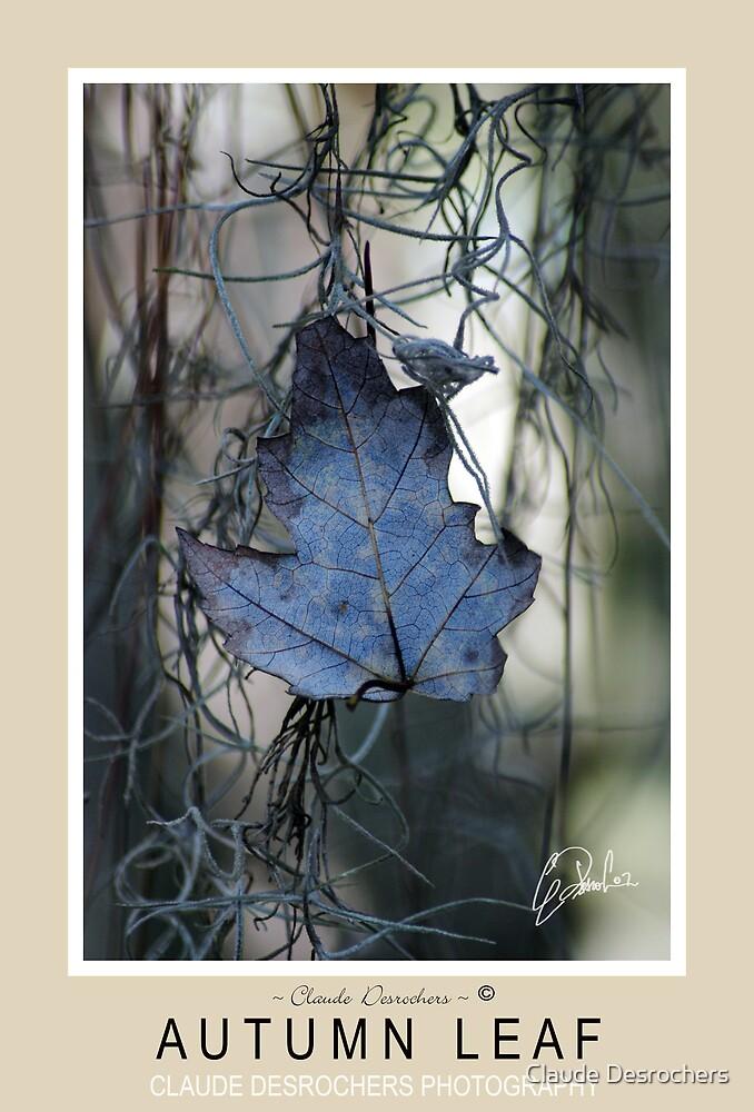 AUTUMN LEAF by Claude Desrochers