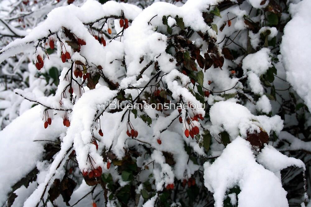 Snow N Berries 1 by Bluemoonshadow