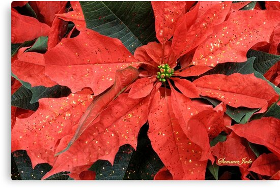 Poinsettia ~ Sprinkled with Glitter by SummerJade