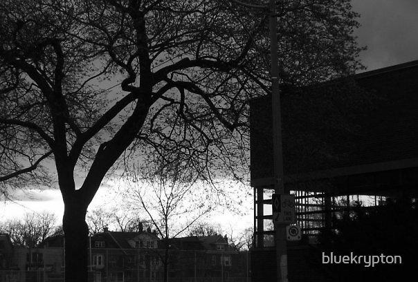 Night Shade by bluekrypton