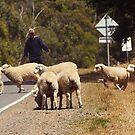 Herdsman by Wildpix