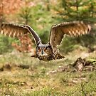 Eagle Owl in Flight by Dave Hare