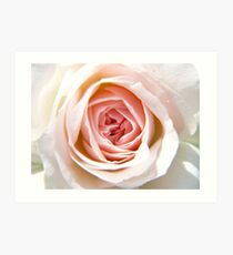 Pink Flower Up Close and Personal Art Print