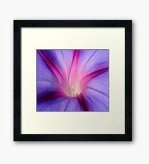 Lilac and Fuschia Morning Glory in Macro Framed Print