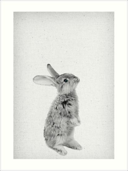 Rabbit 11 von froileinjuno