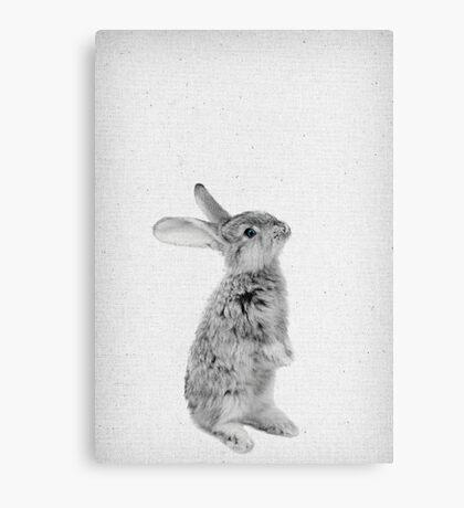 Rabbit 11 Canvas Print