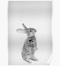 Rabbit 11 Poster