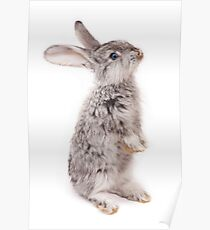 Rabbit 12 Poster