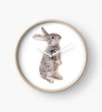Rabbit 12 Uhr