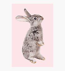 Rabbit 12 Fotodruck