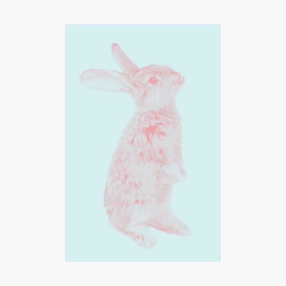 Rabbit 07 Fotodruck