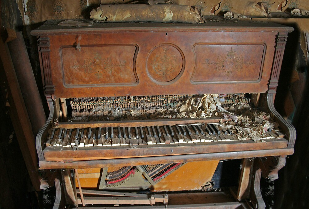 The Rat Nest Symphony by rossco