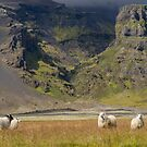 Iceland by Dominika Aniola