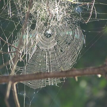 Web by martina