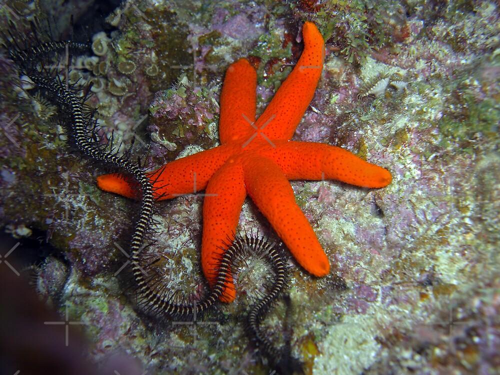 6 legged Starfish by Michael Powell