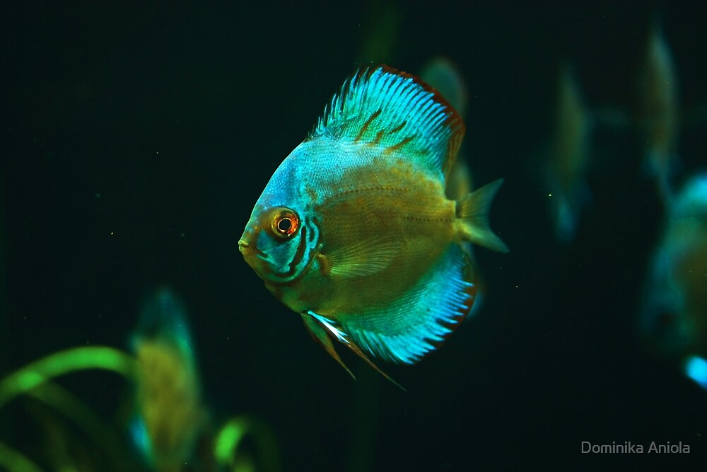 A fish 1 by Dominika Aniola