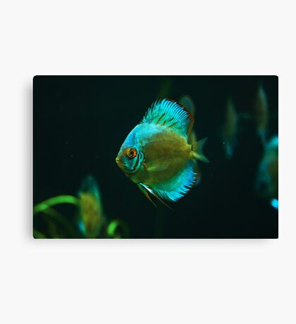 A fish 1 Canvas Print