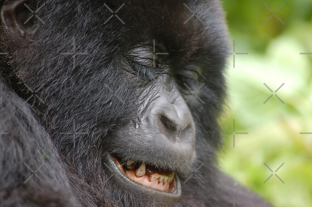 Gorilla Smile by ApeArt