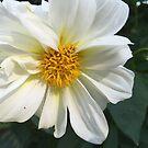 Flower Closeup  by WaleskaL