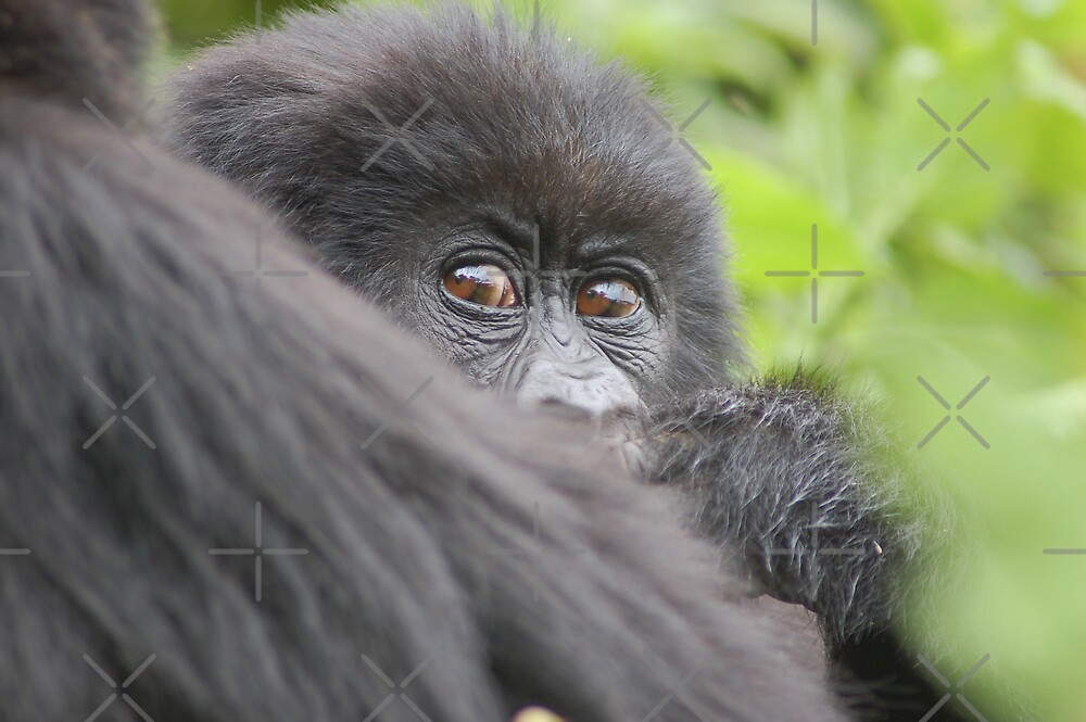 Baby Mountain Gorilla by ApeArt