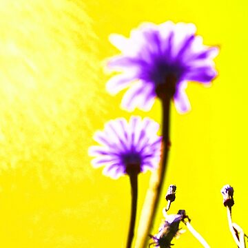 Two Dream Flowers - Yellow by vampyba