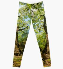 Ness Glen, Mystical Irish Wood Leggings