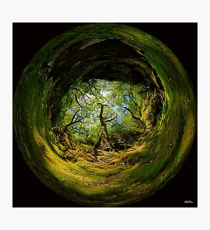 Ness Glen, Mystical Irish Wood Photographic Print