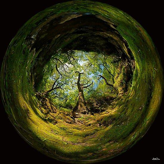 Ness Glen, Mystical Irish Wood by George Row