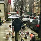 Dog Walking in NY by Christine  Wilson