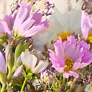 Arsty Cosmo Flowers by Sandra Foster
