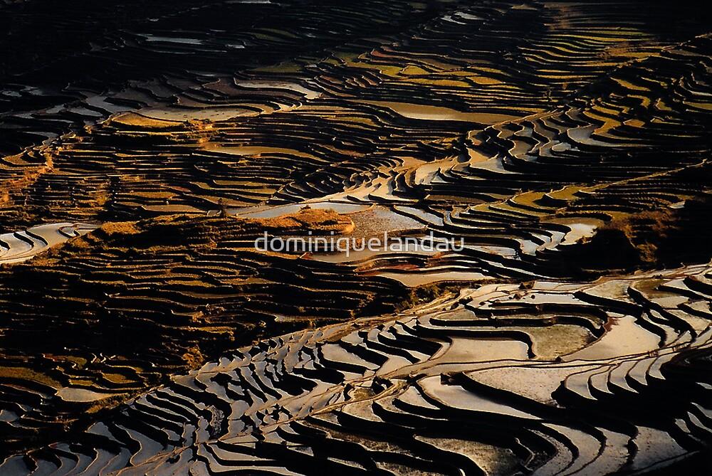 rice terrace by dominiquelandau