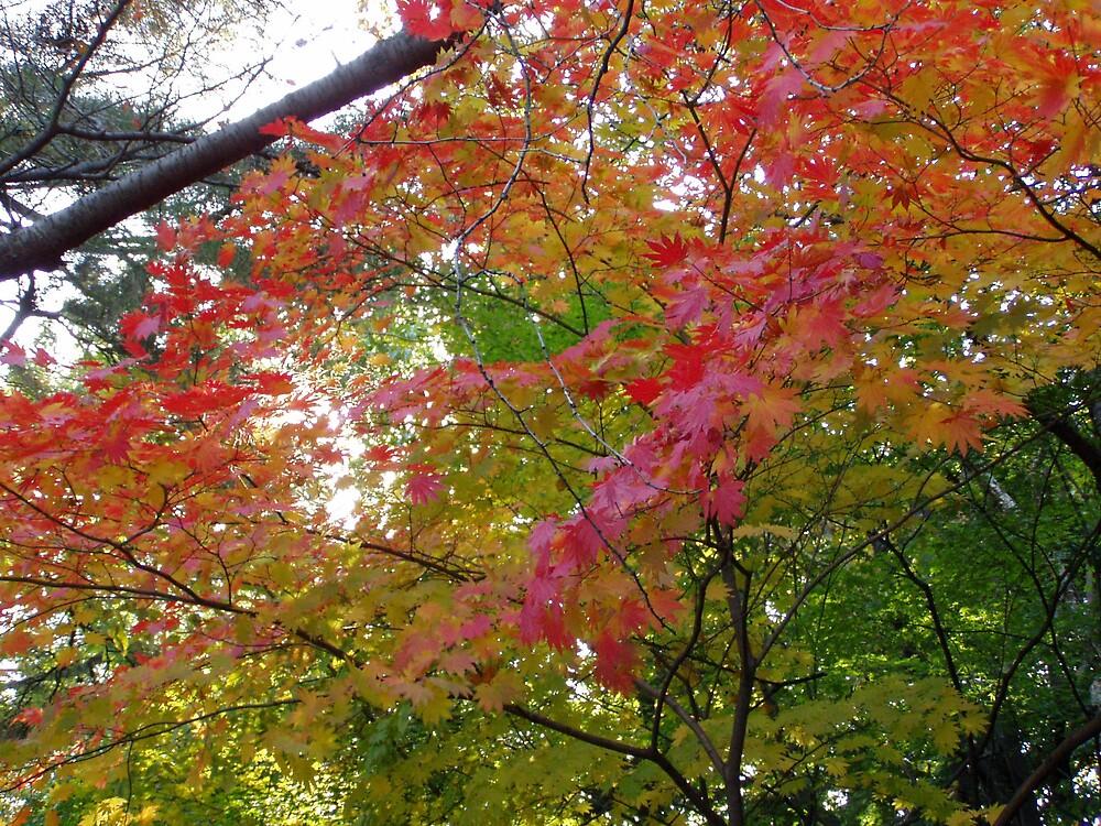 Autumn Colours by lucio della ratta
